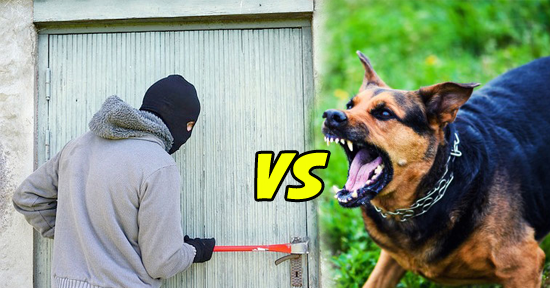 Perros vs intrusos